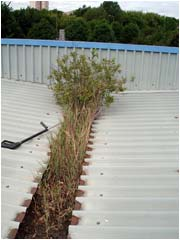 10 years of plant life growth on this roof